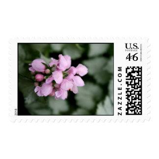 Pink Blossom Stamp
