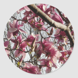 Pink Blossoms Classic Round Sticker
