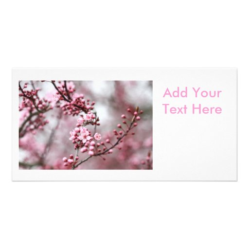 Pink Blossoms in Spring Photo Photo Card