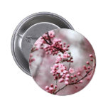 Pink Blossoms in Spring Photo Pinback Button
