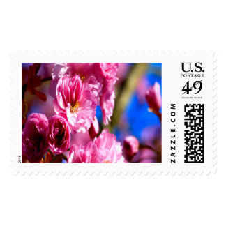 Pink Blossoms Large Postage