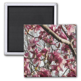 Pink Blossoms Magnet