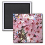 Pink Blossoms on Ornamental Flowering Tree Magnet
