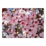Pink Blossoms on Spring Flowering Tree Card