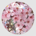 Pink Blossoms on Spring Flowering Tree Classic Round Sticker