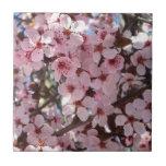 Pink Blossoms on Spring Flowering Tree Tile