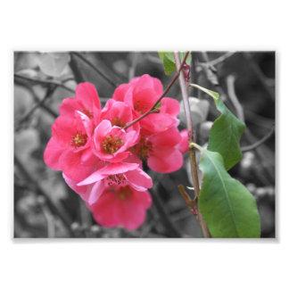 "Pink Blossoms Photograph 5""x 7"""