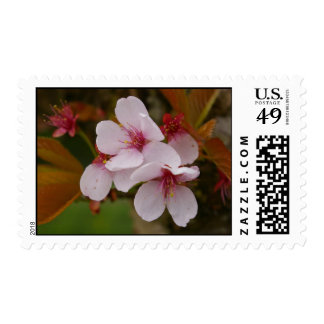 Pink Blossoms Postage Stamps