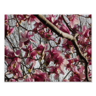 Pink Blossoms Print