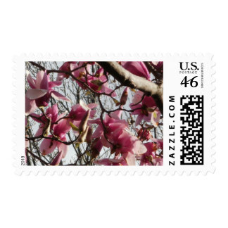Pink Blossoms Stamps