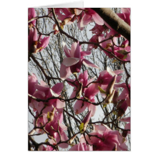Pink Blossoms Stationery Note Card