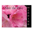 Pink Blossoms Wedding Save the Date Postcard