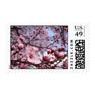 PINK BLOSSOMS Wedding Stamps 10 Wedding Postage