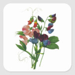 Pink Blue and Purple Sweet Peas by Redoute Stickers
