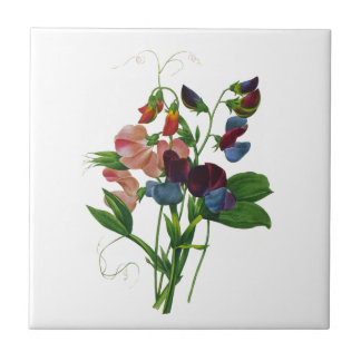 Pink Blue and Purple Sweet Peas by Redoute Tile