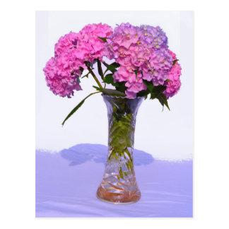 Pink & Blue  Hydrangeas Postcard