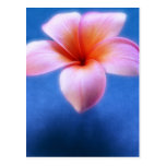 Pink & Blue Plumeria Frangipani Hawaii Flower Postcard