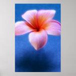 Pink & Blue Plumeria Frangipani Hawaii Flower Poster