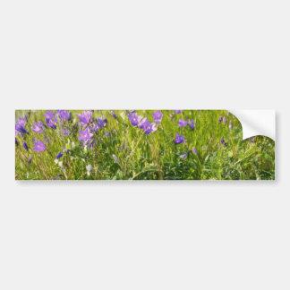 Pink Bluebell (Campanula Rotundifolia) flowers Bumper Stickers