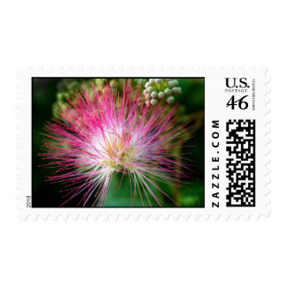 Pink Boa-Postage Stamp