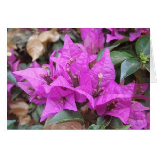 Pink Bougainvillea Flowers Greeting Card