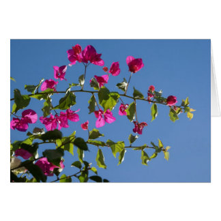 Pink Bougainvillea in Afternoon Sun Card