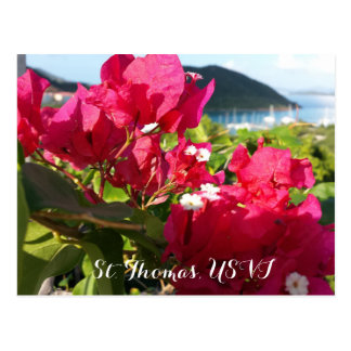 Pink Bougainvillea with Island Harbor Postcard