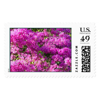 Pink Bougainvilleas Large Stamp