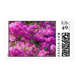 Pink  Bougainvilleas Medium Stamp