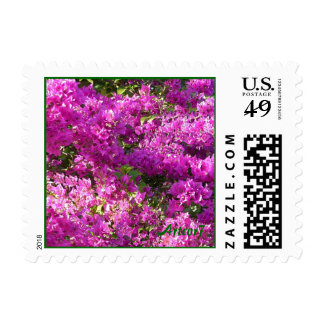 Pink Bougainvilleas Small Stamp