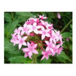 Pink Bouquet Post Card