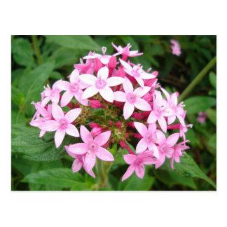 Pink Bouquet Postcard