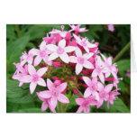 Pink bouquet v2 card