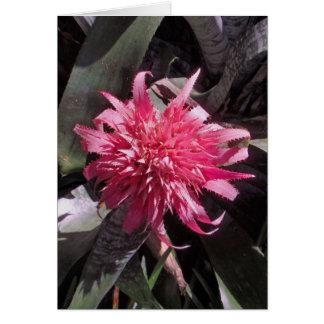 Pink Bromeliad Card