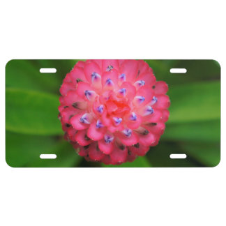 Pink Bromeliad License Plate