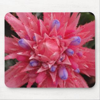 Pink Bromeliad Mouse Pad