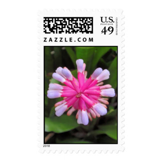 Pink Bromeliad Postage Stamp