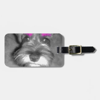 Pink Brow Miniature Schnauzer Puppy Rock & Roll Luggage Tags