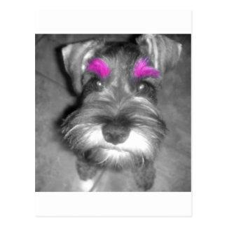 Pink Brow Miniature Schnauzer Puppy Rock & Roll Postcard