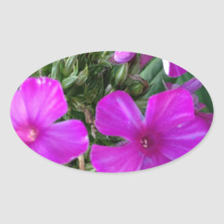 Pink Bud Oval Sticker