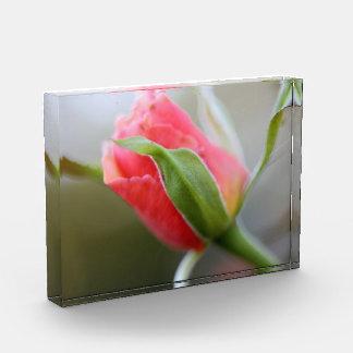 Pink Budding Rose Award