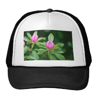 pink buds mesh hats