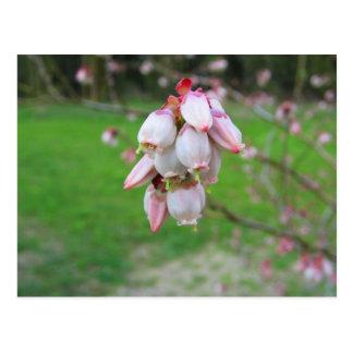 Pink Buds Postcard