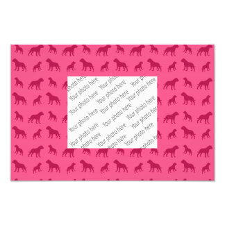 Pink bulldog pattern photo print