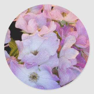 Pink Bush Rose Classic Round Sticker