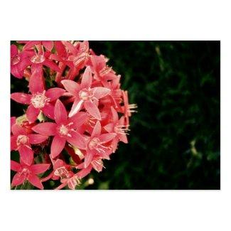 Pink profilecard