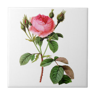 Pink Cabbage Rose by Pierre Joseph Redoute Ceramic Tile