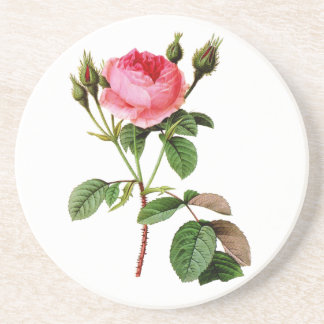 Pink Cabbage Rose by Pierre Joseph Redoute Drink Coaster