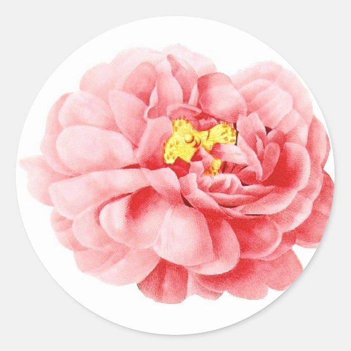Pink Cabbage Rose Flower Shabby Cottage Classic Round Sticker