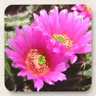 Pink cactus blossom coasters- set of 6 drink coaster